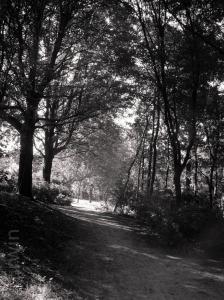 bos in monochroom (1 van 1).jpg